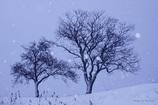 2本の木がある風景2