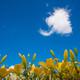 浮浪雲とゆり