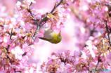 春を届ける鶯色の天使