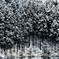 水辺の杉森