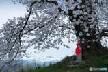 人待ち地蔵桜 Ⅰ