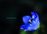 CANON Canon EOS 60Dで撮影した(☆Blue jewel)の写真(画像)