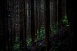 森へ #2