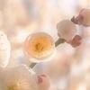 春の香   harunoka