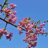 春のお便り1