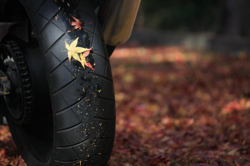 秋のヒトトキ~休憩