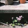 世田谷の花