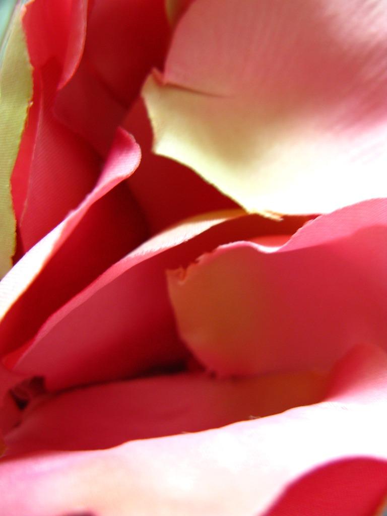 Pinkの花びら