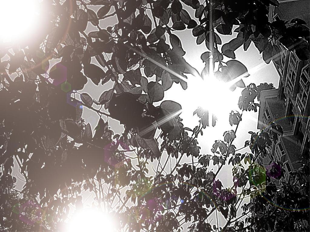 太陽がいっぱい