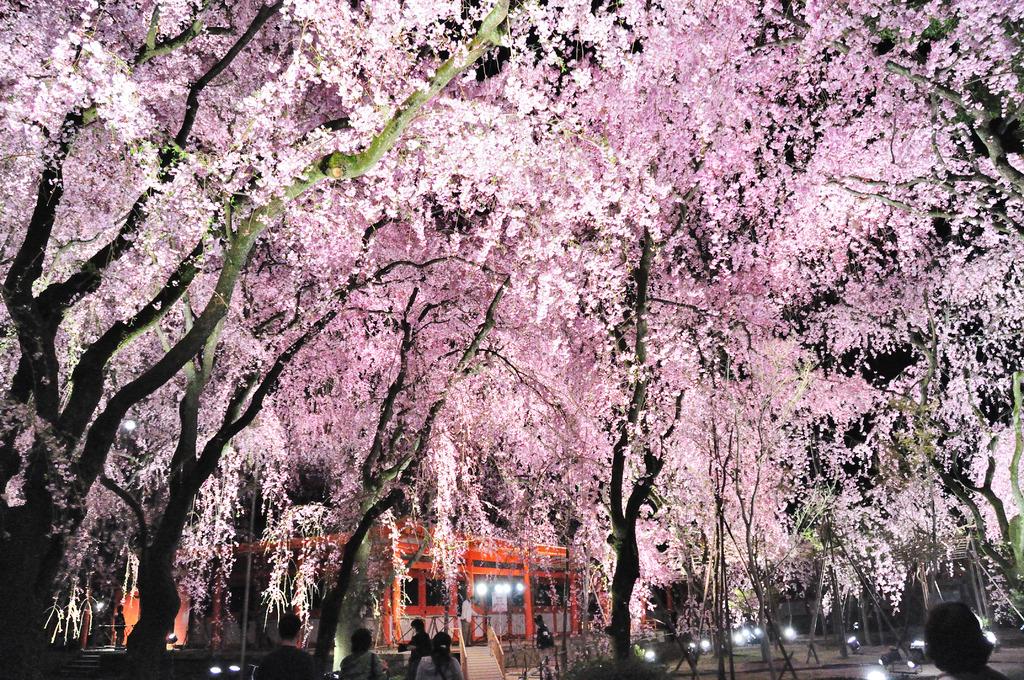 平安神宮ライトアップ2