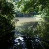 谷戸の池2