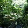谷戸の池4