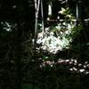 谷戸の森1