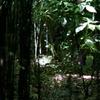 谷戸の森2