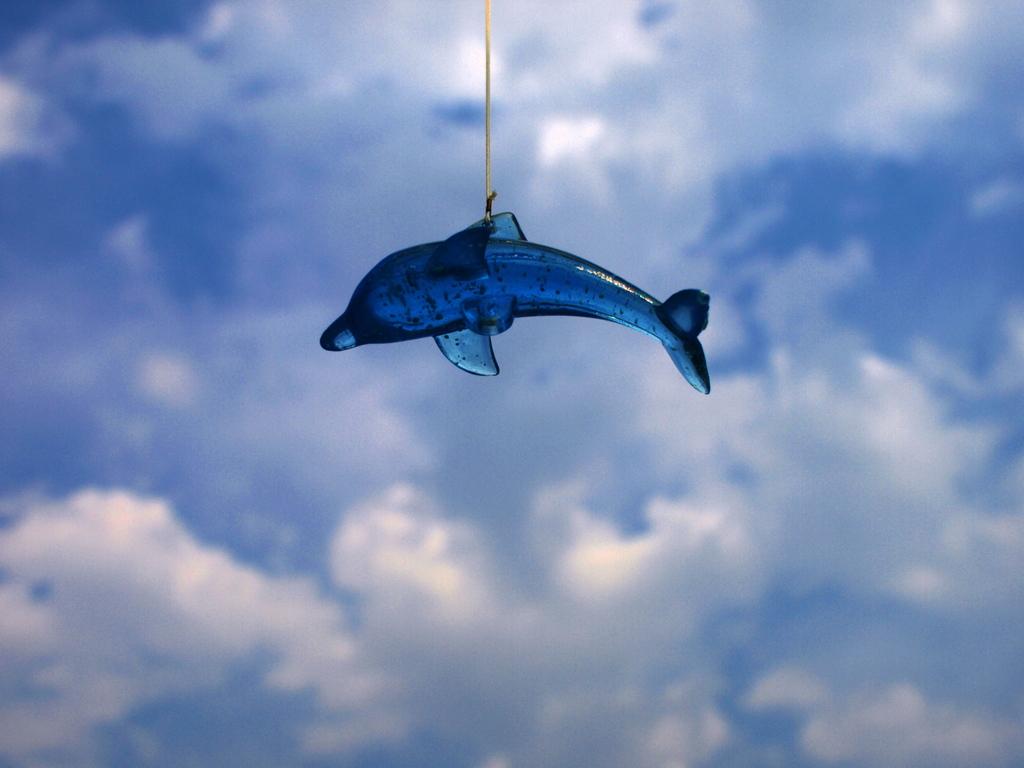 Sky dolphin