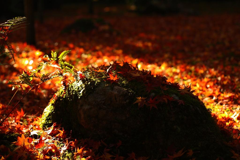 京都・高桐院