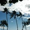 ハワイさん家のヤシの木君