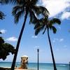 椰子の木と監視小屋