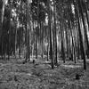 竹林に射す光
