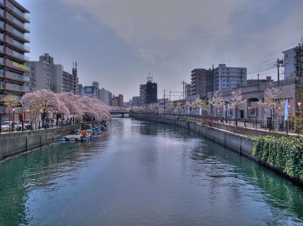 大岡川の桜-6 HDR