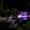 熱海城の夜桜HDR
