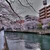 大岡川の桜-5 HDR