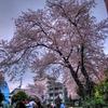 南太田の桜 HDR