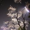 夜桜ビーム2