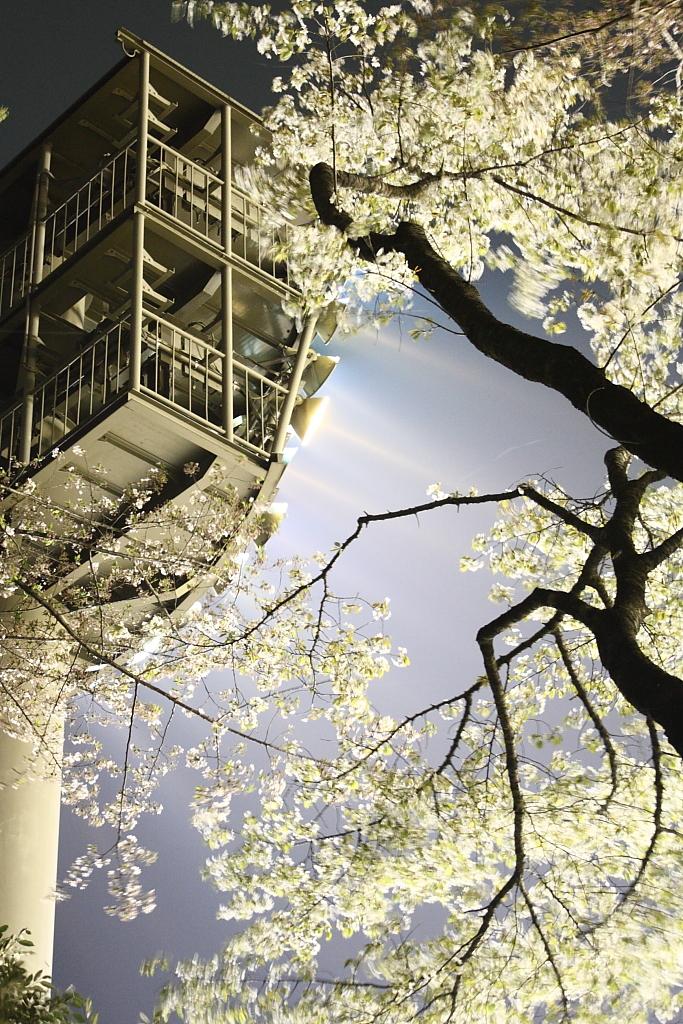 夜桜ビーム1