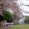 雨に桜、そしてロケット。