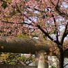上野・五條天神社
