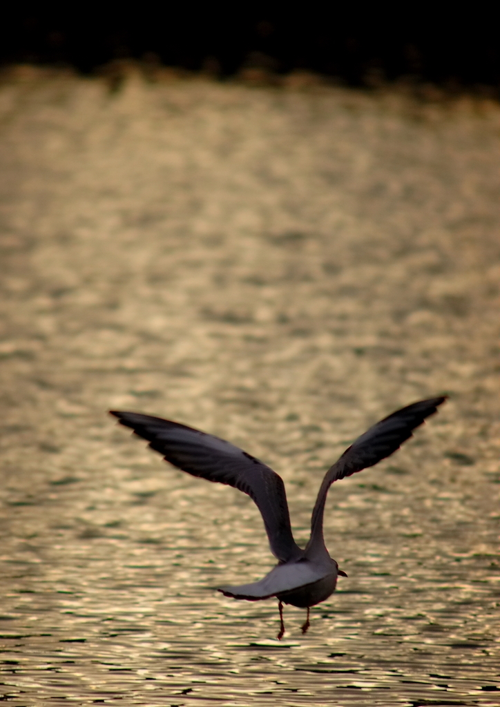 黎明を泳ぐ