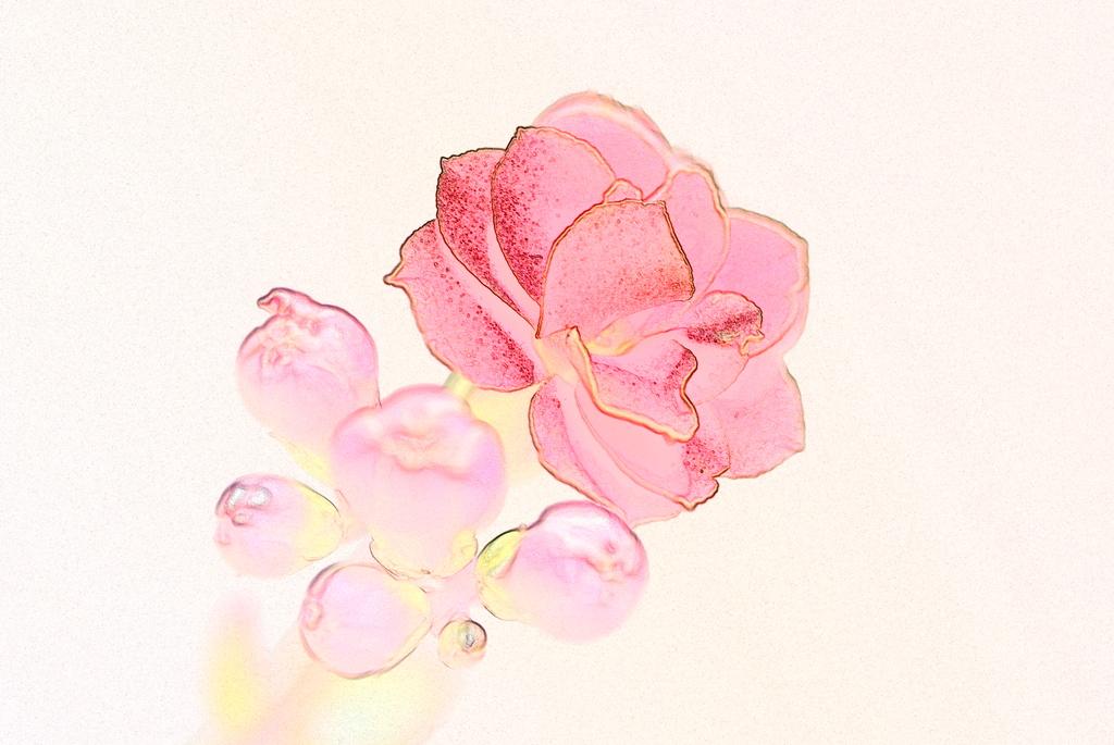 花 (デジタルフィルタ:水彩画)