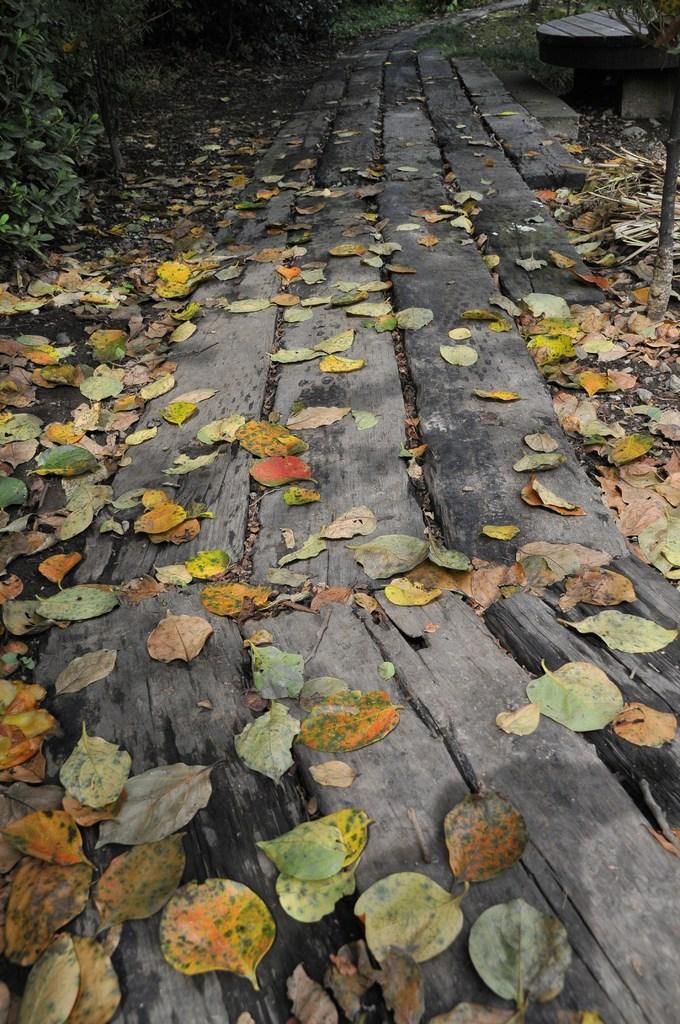 秋風の小径