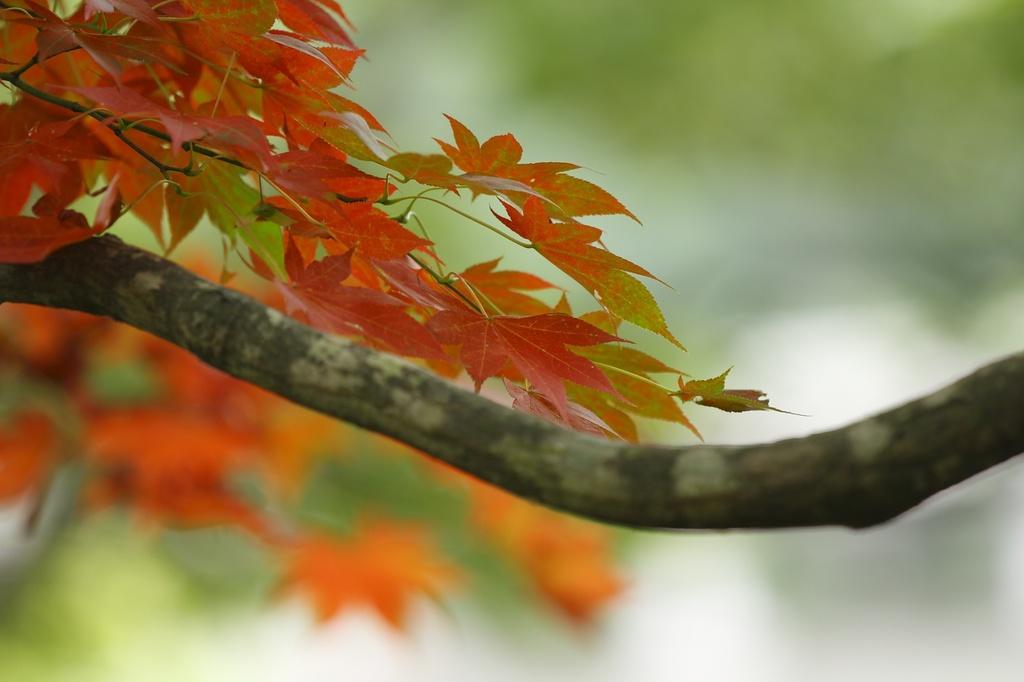 ここだけ秋