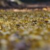 里山の黄色