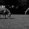 デトロイト動物園にて 2