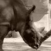 デトロイト動物園にて 1