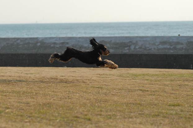 uki♪ uki♪ jump!