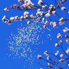 風船と桜と青空