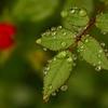 水玉の詩  4
