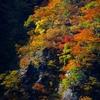 深山の紅葉