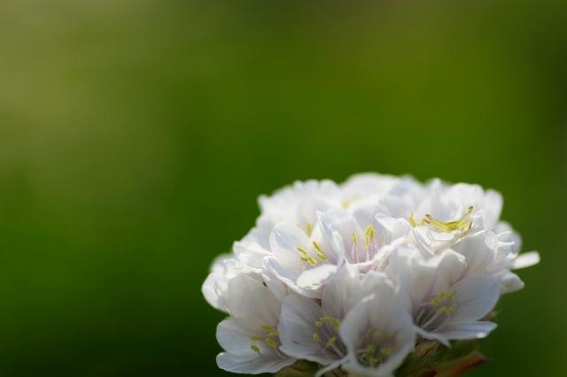 花束の思い