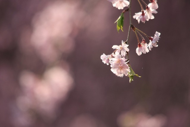 春の瞬き6