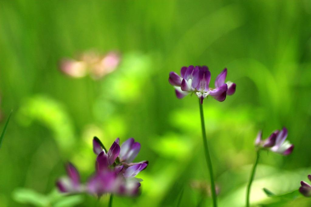 花たちの午後