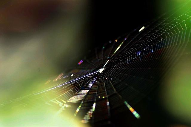 光の連鎖 10