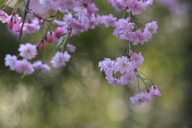 春の瞬き8