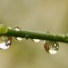 水玉の詩  1