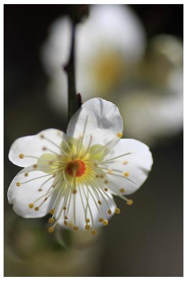待ち焦がれた春