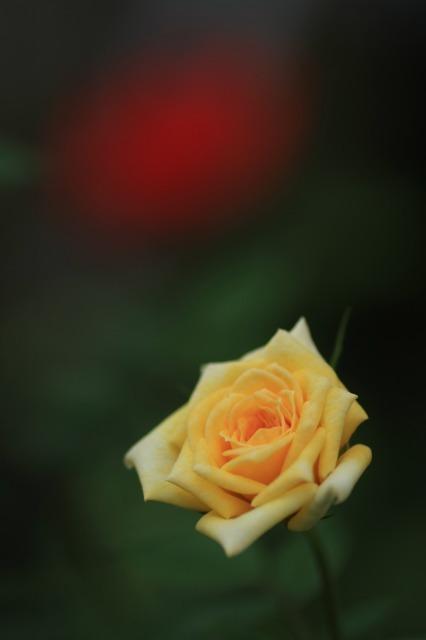 薔薇の回廊 13